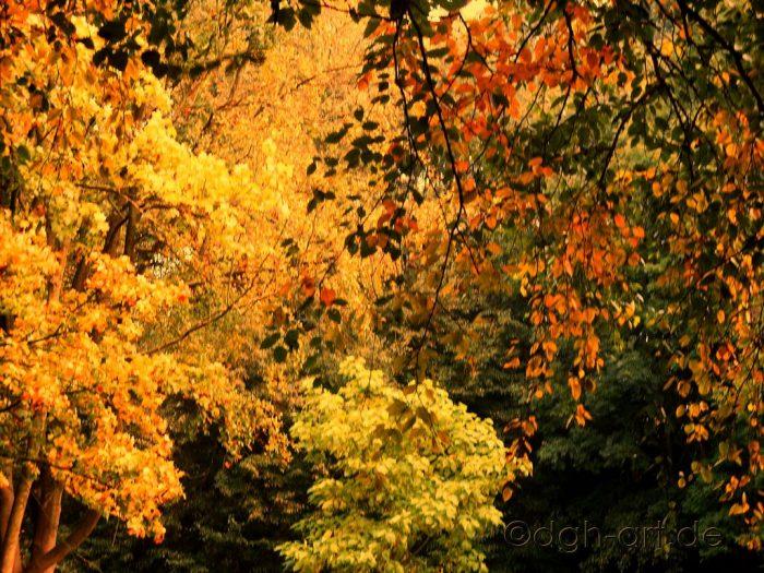 Herbstimpression 4