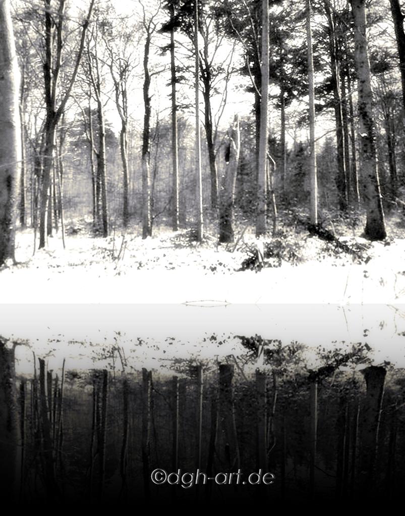 Im Winterwald 2