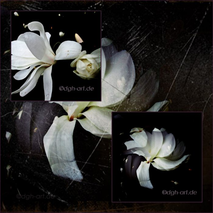 Magnolia Duo 1