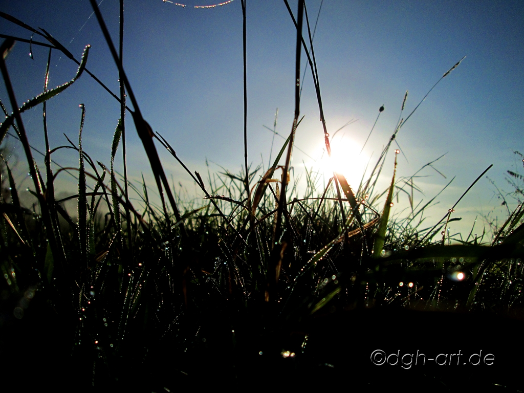 Morgensonne im Festglanz
