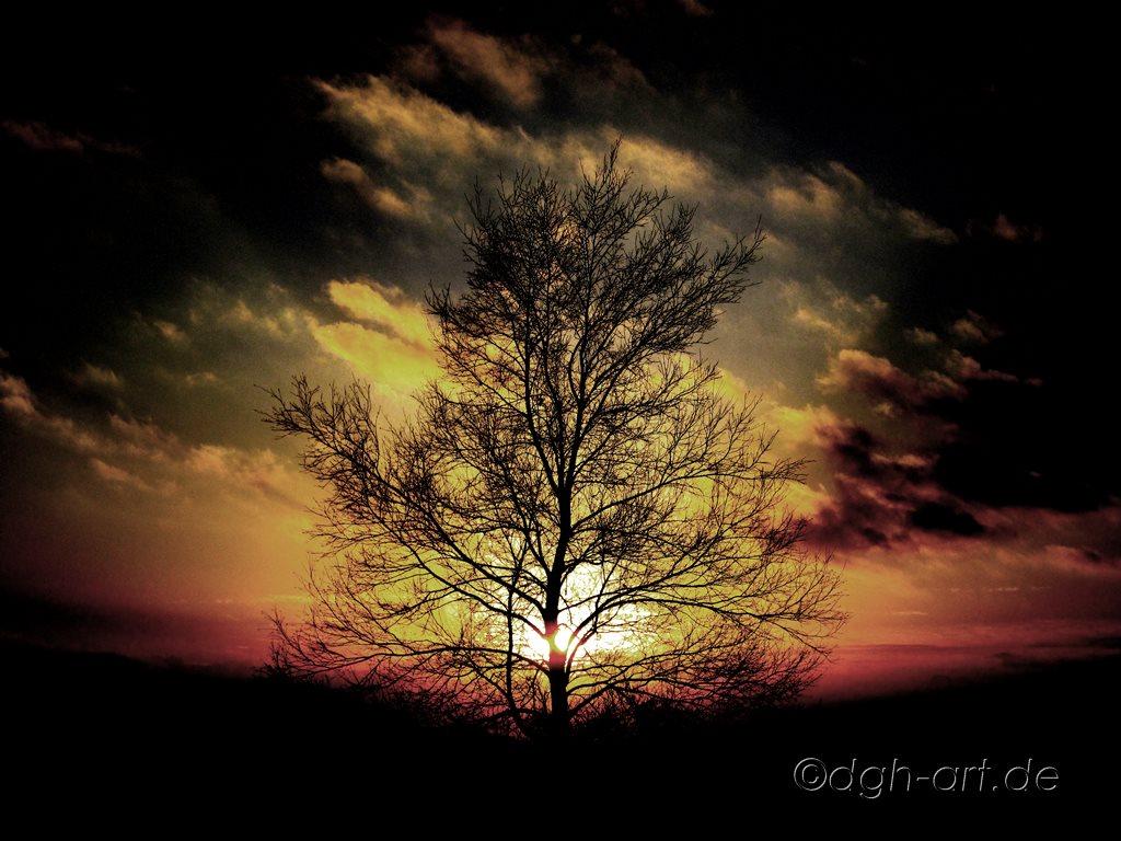 Sonne und Baum